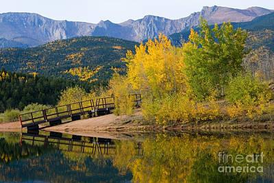 Cactus - Autumn Aspen at Crystal Creek Reservoir Pikes Peak by Steven Krull