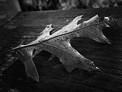 Photograph - Autumn Leaf.. by Phyllis Meinke