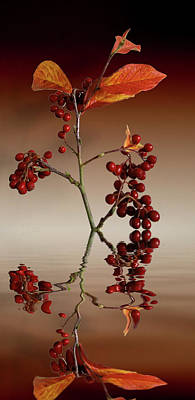 Photograph - Autumn Leafs And Red Berries by David French
