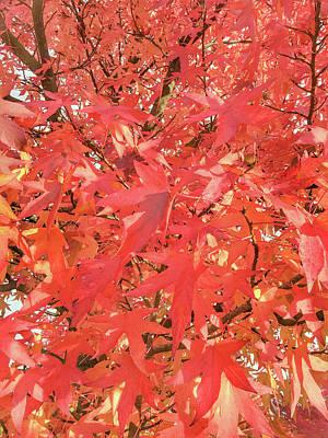 Autumn Leaves Background Art Print by Tom Gowanlock