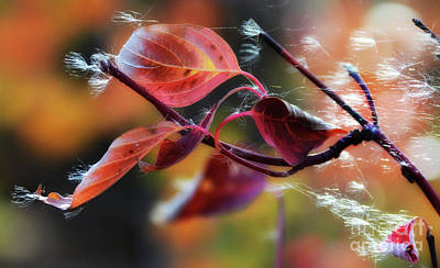 Photograph - Autumn Leaves by Bob Christopher