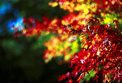 Photograph - Autumn Leaves by David Harding