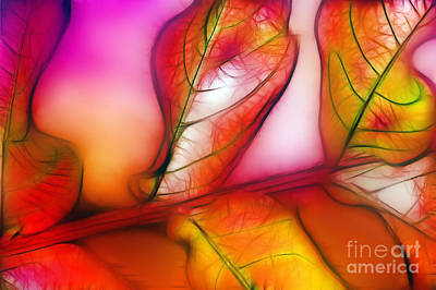 Photograph - Autumn Leaves by Judi Bagwell