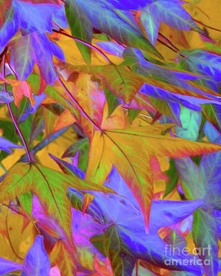 Photograph - Autumn Leaves by Scott Cameron