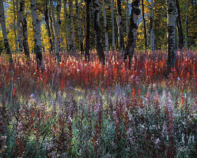 Teton Photograph - Autumn Light by Leland D Howard