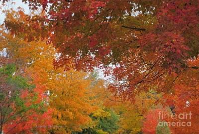 Photograph - Autumn Rainbow by Kathie Chicoine