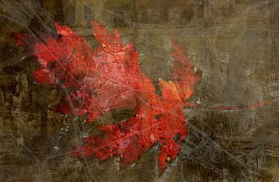 Photograph - Autumn Red by Jim Vance