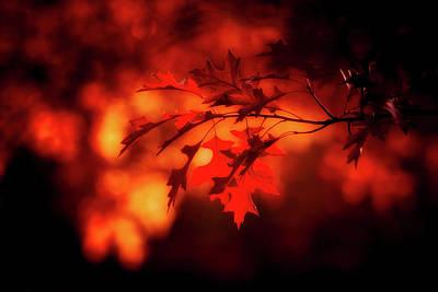 Photograph - Autumn Serenity by Pixabay