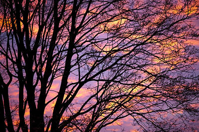 Floral Photograph - Autumn Sky by Konstantin Dikovsky