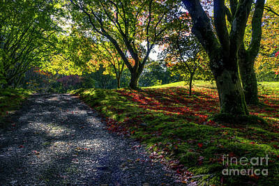 Photograph - Autumn Sunlight by Ian Mitchell