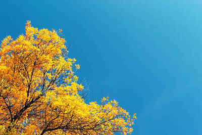 Photograph - Autumn Gold And Blue  by John Williams