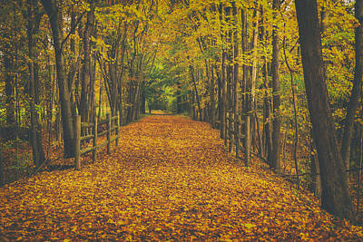 Ing Photograph - Autumns Path by Karol Livote