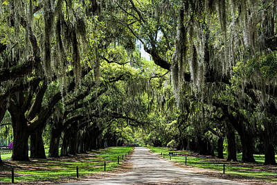 Photograph - Avenue Of Oaks by Ed Waldrop