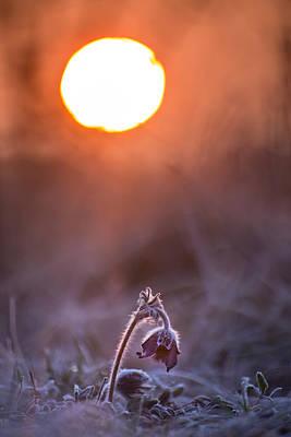 Photograph - Awakening by Davorin Mance