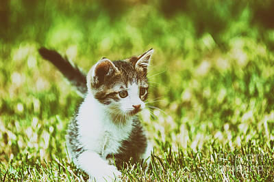 Baby Cat Playing In Grass Art Print