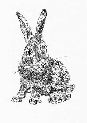 Drawing - Little Rabbit by Masha Batkova