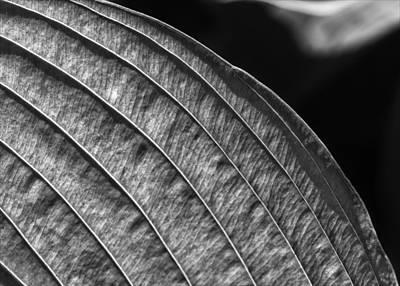 Back Lit Leaf Art Print by Robert Ullmann