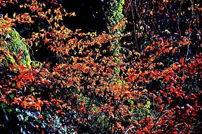 Photograph - Backlit Leaves by Nik Watt