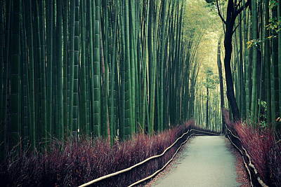 Photograph - Bamboo Grove by Songquan Deng