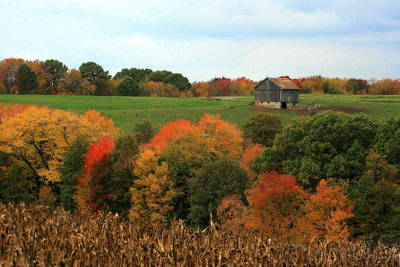 Photograph - Barn On Autumn Hillside  A Seasonal Perspective Of A Quiet Farm Scene by Angela Rath