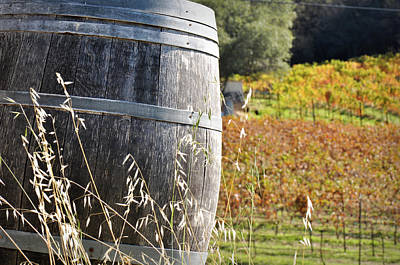 Photograph - Barrel In The Vineyard by Brandon Bourdages