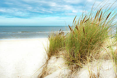 Print featuring the photograph Beach Grass by Hannes Cmarits
