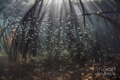 Beams Of Sunlight Filter Among The Prop Art Print by Ethan Daniels