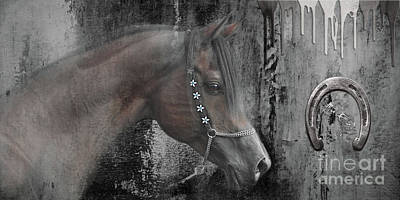 State Love Nancy Ingersoll Rights Managed Images - Beautiful Arabian Horse Royalty-Free Image by Mia Stedt
