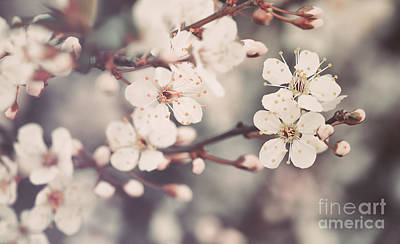 Photograph - Beautiful Floral Background by Anna Om