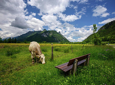 Photograph - Beautiful Landscape In The Alps With Cows Grazing In Green Meadows, Typical Countryside And Farm Between Mountains. by Marek Kijevsky