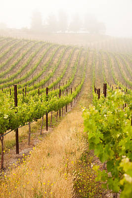 Grape Leaves Photograph - Beautiful Lush Grape Vineyard by Andy Dean