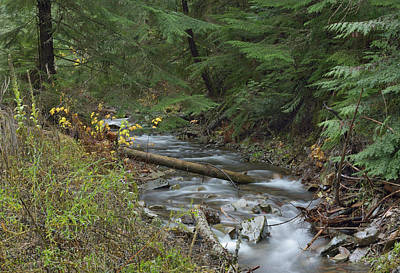 Photograph - Beauty Creek by Vic Harris
