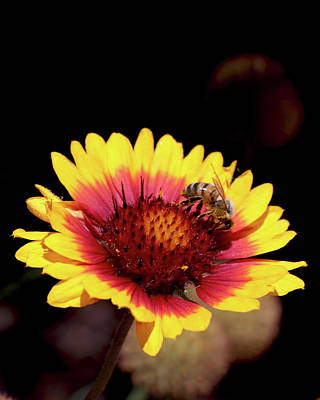 Bee On Flower Art Print by Michael Riley