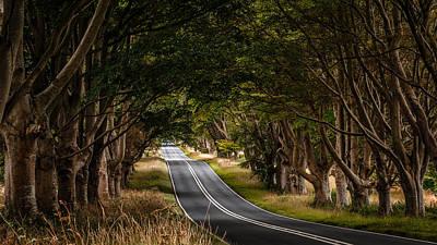 Photograph - Beech Avenue by Kelvin Trundle