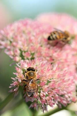 Photograph - 2 Bees by Angela Rath
