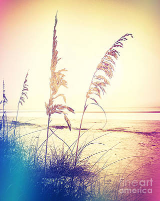 Before Day Sea Oats Art Print by Chris Andruskiewicz