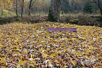 Photograph - Bench Covered In Fallen Leaves by Michal Boubin