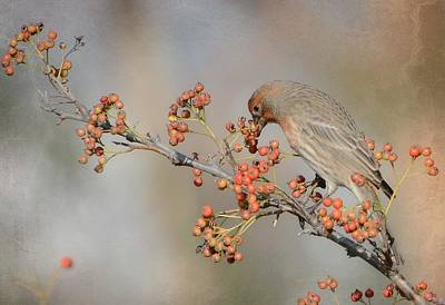 Photograph - Berry Good by Fraida Gutovich