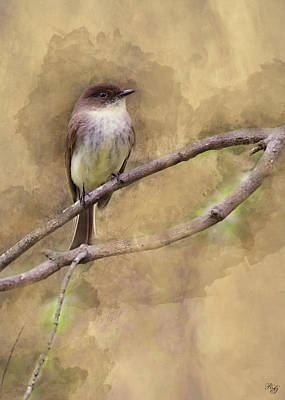 Digital Art - Bird - Eastern Phoebe by Ron Grafe