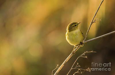 Photograph - Bird In Golden Light by Perry Van Munster