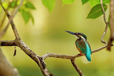 Nature Digital Art - Bird by Maye Loeser
