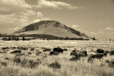 Photograph - Bison In Yellowstone National Park by L O C