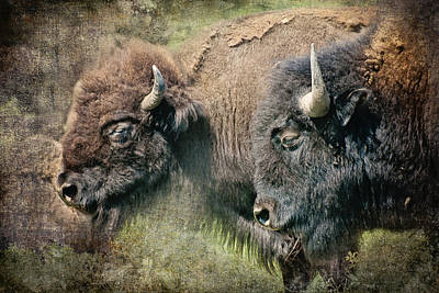 Bison Photograph - Bisons by Iris Greenwell