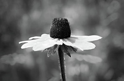 Photograph - Black And White Flower by Lilia D