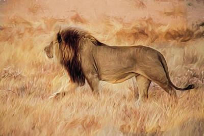 Photograph - Black-maned Lion Of The Kalahari Impressions by Kay Brewer