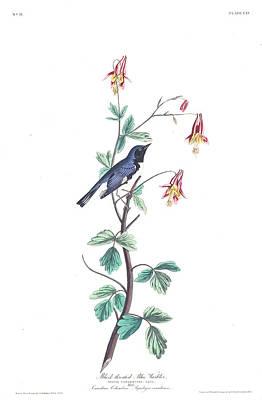 Warbler Wall Art - Painting - Black-throated Blue Warbler by John James Audubon