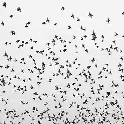 Photograph - #blacksunday #whitesunday by Tricia Elliott