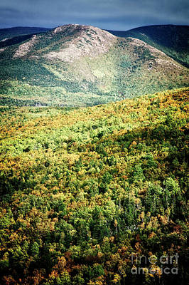 Photograph - Blazing Forest by Scott Kemper
