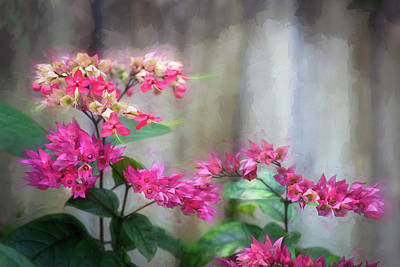 Photograph - Bleeding Heart Flowers Clerodendrum Painted  by Rich Franco