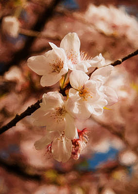 Photograph - Romantic Sakura Blossoms by Marilyn Wilson